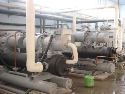 Nhà máy chế biến chả cá Surimi